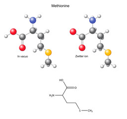 Methionine (Met) - chemical structural formula and models
