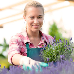 Garden center woman with lavender potted flowers