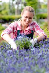 Garden center woman in lavender flowerbed smiling