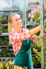 Garden center woman work with potted flowers
