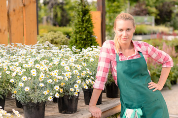 Garden center woman worker potted daisy flowers