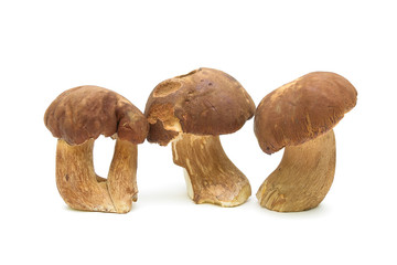 Three mushrooms close up isolated on white background.