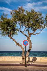 Halteverbotsschild & Baum an der Mittelmeerküste