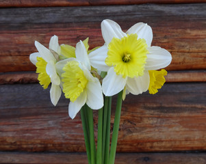 flowers narcissus  on wooden background