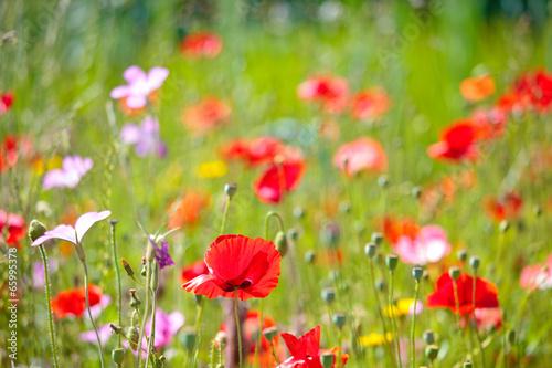 Papiers peints Jardin Prairie fleurie