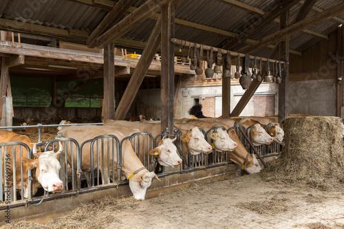 Papiers peints Vache Vaches à la ferme