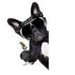 Obrazy na płótnie, fototapety, zdjęcia, fotoobrazy drukowane : martini dog