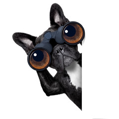 dog looking through binoculars