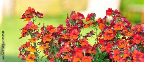 Plante vivace en fleurs