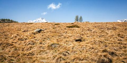 cima del monte Disgrazia - Valtellina (IT)