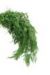 Fresh dill herb.