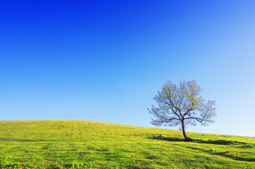 lonely tree on meadow against blue sky