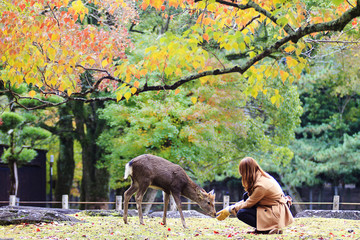 Visitors feed wild deer
