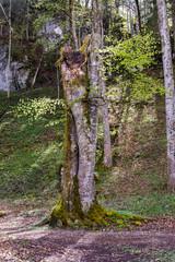 Bäume in der Pöllatschlucht im Ostallgäu