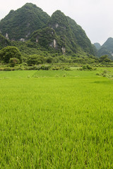 Rice fields and karst mountains landscape china