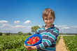Boy with a bowl of strawberries on a strawberry field