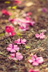Vivid purple flowers on the ground