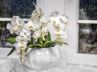 Background with white orchid