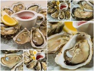 Collageof  platter of fresh organic raw oysters on ice