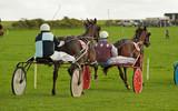 Trotting Race Synod Inn Cardigion