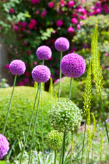 Jardin fleuri de France