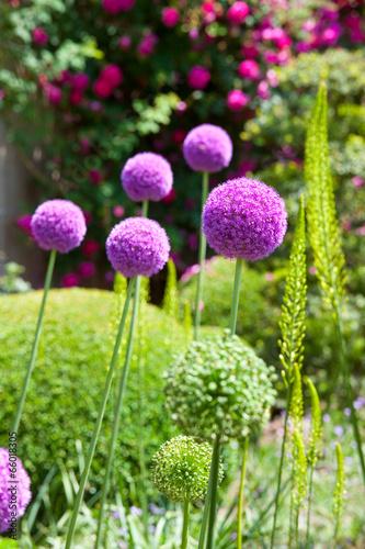 Keuken foto achterwand Tuin Jardin fleuri de France