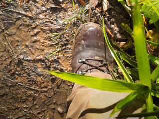 walking boot in mud