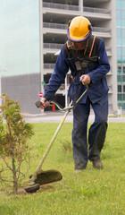 Lawn mower worker cutting grass near thuja tree
