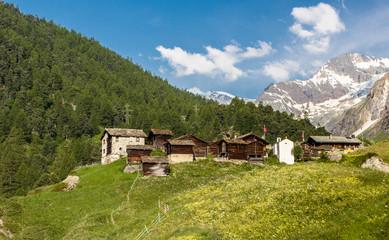 Альпийские виды