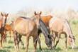 horse, equine, nag, hoss, hack, dobbin