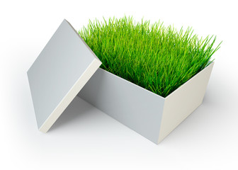 green grass in white open box
