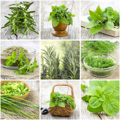 herbs collection - collage
