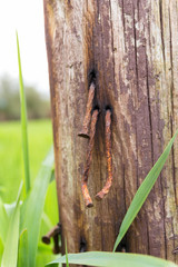 Group of rusty nails.