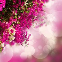 garden with bouganvilla flowers