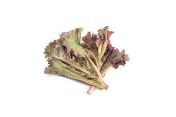 leafy purple lettuce