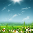 Alpine pastoral landscape with beauty daisy flowers under bright