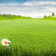 Beauty summer day on the meadow, environmental backgrounds