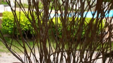 Branchy Green Bush against Azure Swimming Pool.