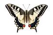 Leinwanddruck Bild - Butterfly Papilio machaon
