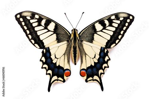 Deurstickers Vlinder Butterfly Papilio machaon