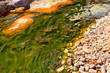 green alga in acidic river