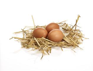 3 Eier im Nest