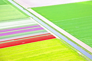 Dutch colourful flower field from above