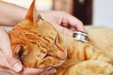 Veterinarian examining a kitten - 66044139