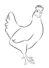 Sketch of Hen