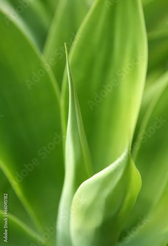 Aluminium Cactus aloe vera
