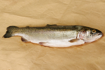 Raw rainbow trout on brown fishmonger's paper