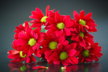 beautiful bouquet of red chrysanthemums