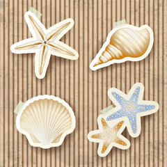 Seashells on cardboard background