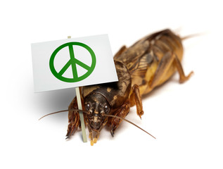 Mole cricket demonstrates for peaceful sollution of pest problem